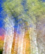 Fall Birches Print by Doug Hockman Photography