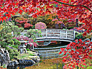 Red Leaves Acrylic Prints - Fall Bridge in Manito Park Acrylic Print by Carol Groenen