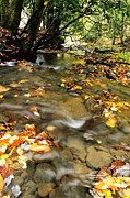 Autumn Scene Photos - Fall Color Anthony Creek by Thomas R Fletcher