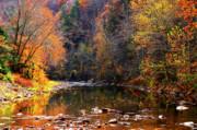 Mountain Stream Photo Posters - Fall Color Elk River Poster by Thomas R Fletcher
