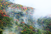 Fog Rising Photos - Fall color Highland Scenic Highway by Thomas R Fletcher