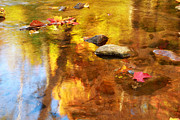 Fallen Leaf Photos - Fall Color in Stream by Charline Xia