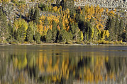 Rock Creek Lake Prints - Fall Color Reflection And Tree Print by Rich Reid