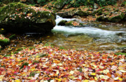 Mountain Stream Photo Posters - Fall Color Rushing Stream Poster by Thomas R Fletcher