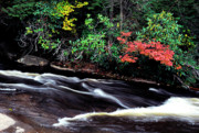Swallow Posters - Fall Color Swallow Falls State Park Poster by Thomas R Fletcher