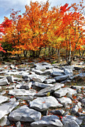 Fall Colors Photos - Fall Color Trees and Rocks - West Virginia by Dan Carmichael