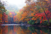 Williams River Scenic Backway Posters - Fall Color Williams River Mirror Image Poster by Thomas R Fletcher