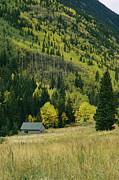 Log Cabins Photos - Fall-colored Aspen Trees And An Old by Gordon Wiltsie