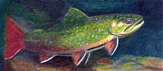 Fly Fishing Drawings Originals - Fall Colors - Brook Trout by Quinton Chapman
