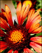 Flowers Photographs Prints - Fall Colors - II Print by Tam Graff