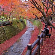 River Scene Posters - Fall Colors Along Bending River In Kyoto Poster by Jake Jung
