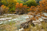 Fall Colors Along The Pedernales River Print by Mark Weaver
