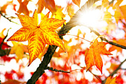 Leaf Change Prints - Fall Colors Print by Carlos Caetano