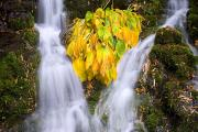 World Peace Art - Fall Colors In Crystal Springs Falls by Craig Tuttle