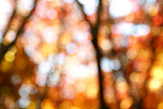 Light Greeting Cards Prints - Fall colors Print by Les Cunliffe