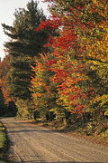 Autumn Scenes Photos - Fall Colors Line A New England Road by Heather Perry