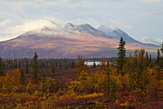 Chris Heitstuman - Fall Colors of Alaska