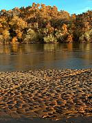 The Nature Center Prints - Fall Colors on the Rio Grande 1 Print by Tim McCarthy