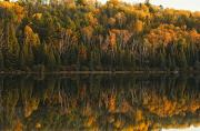 Door Reflections Posters - Fall Colors Reflected In The Waters Poster by Robert Postma