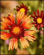 Flowers Photographs Prints - Fall Colors Print by Tam Graff