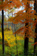 Autumn Woods Posters - Fall Colors Watercolor Poster by Teresa Mucha