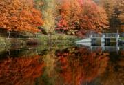 Relection Framed Prints - Fall Colour Framed Print by David  Hubbs