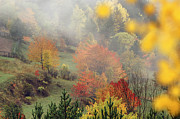 Fall Colours Framed Prints - Fall Colours Framed Print by Ayhan Altun