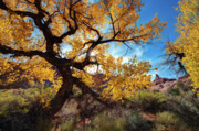 Southern Utah Digital Art Posters - Fall Comes to Arches Poster by Jeff Clay