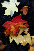 Fall Colors Autumn Colors Posters - Fall Confetti  Poster by Saija  Lehtonen
