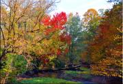 Wide Belt Prints - Fall Creek Print by Brittany H