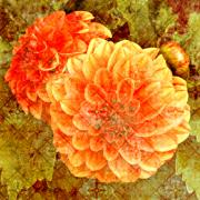 Blooms Mixed Media Acrylic Prints - Fall Dahlias Acrylic Print by Cathie Tyler