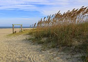 Sandy Beaches Posters - Fall Day on Tybee Island Poster by Carol Groenen