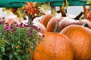 Farm Stand Photo Prints - Fall Display Print by Edward Sobuta