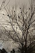 Blackbirds Posters - Fall. Evening.Blackbirds. Poster by Viktor Savchenko