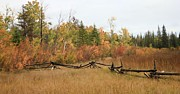 Fall Scenes Photo Originals - Fall Fenceline 1 by Roland Stanke