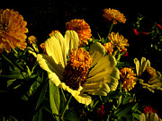 Zinnias Photos - Fall Flowers 2 by Julie Palencia