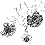 Dead Heads Drawings - Fall Flowers by Elizabeth Thorstenson