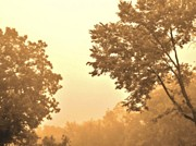 Golds Prints - Fall Foggy Morning Print by Marsha Heiken
