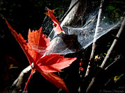 Prescott Framed Prints - Fall Foliage and a Spider Web Framed Print by Aaron Burrows