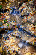 Matt Suess Prints - Fall foliage and water Print by Matt Suess