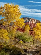 Matt Suess Prints - Fall foliage at Ghost Ranch Print by Matt Suess