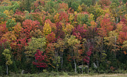 Fall Grass Prints - Fall Foliage in the Adirondack Mountains - New York Print by Brendan Reals