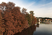 Vltava River Prints - Fall foliage Print by Ivy Ho