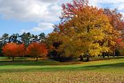 Fall Foliage Print by Lisa  Phillips