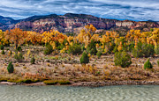 Matt Suess Prints - Fall foliage near Ghost Ranch Print by Matt Suess