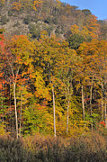 Hardwood Trees Framed Prints - Fall Foliage - New York State Framed Print by Stephen  Vecchiotti
