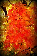 Red Leaf Posters - Fall Foliage Poster by Susanne Van Hulst