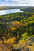 Fall Trees Posters - Fall forest and lake top view Poster by Elena Elisseeva