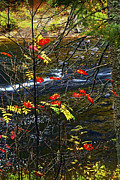 Autumn Landscape Metal Prints - Fall forest and river Metal Print by Elena Elisseeva