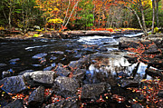 Natural Landscape Posters - Fall forest and river landscape Poster by Elena Elisseeva